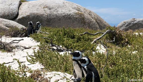 南非彩虹之旅(ET)8天5晚跟團游