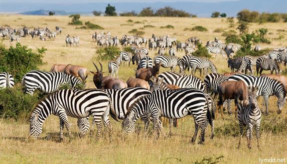 南非、肯尼亞15天12晚跟團游