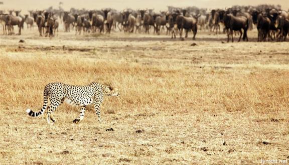 肯尼亞+兩大國家公園+納瓦沙國家公園8日5晚跟團游