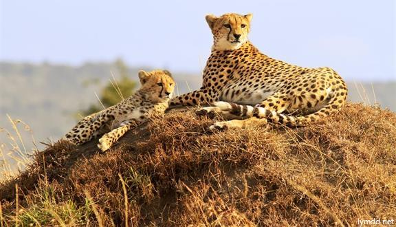 肯尼亞+坦桑尼亞+納米比亞+津巴布韋+贊比亞+博茨瓦納+埃塞俄比亞23日20晚跟團游