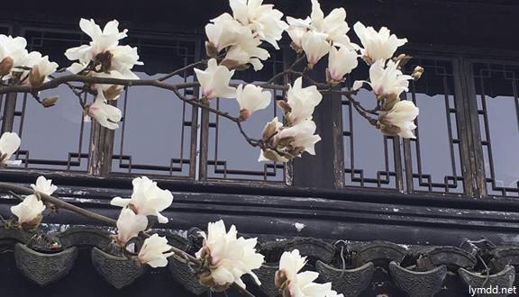 三分三品质之旅+宁波+溪口西江漂流+东钱湖小普陀+香格里拉大酒店+含餐2天1晚跟团游