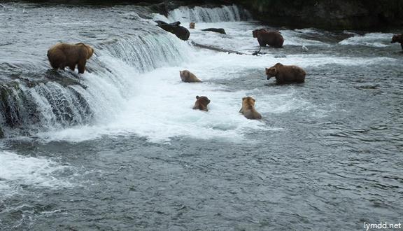 美國阿拉斯加觀熊11日9晚跟團游