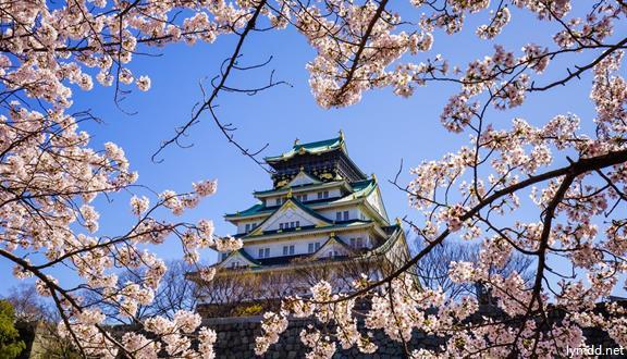 皇家加勒比海洋量子号 2019年5月24日 上海-大阪-神户-东京-上海7晚8天