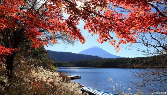 【日本自开班】日本本州之东京 富士山 京都 奈良 名古屋 大阪6天5晚跟团游