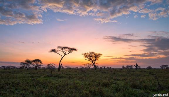 【青享】肯尼亚+坦桑尼亚15日12晚东非掠影之旅(七大国家公园+两大湖区+新树顶酒店+坦桑段升级敞篷越野车+QR转机)