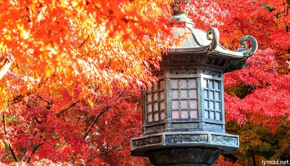 【惠玩】日本本州优选当季赏枫6日5晚跟ope体育app下载(11-12月)