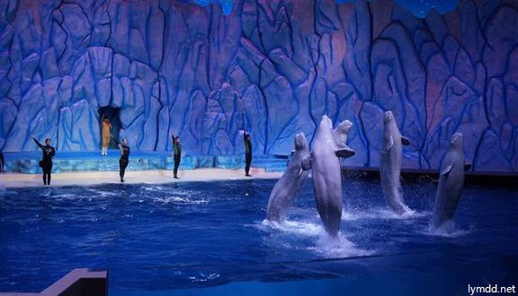 【惠玩】长隆集结营(长隆动物园+珠海海洋王国)双卧6天3晚亲子游
