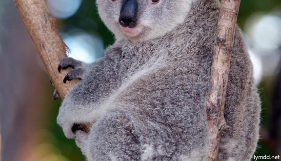 澳式之美 饕餮合家欢 - 澳大利亚+新加坡10天7晚 东方购物